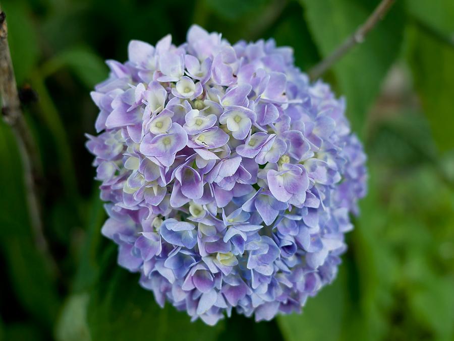 bluehyd