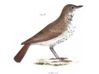bird-sm
