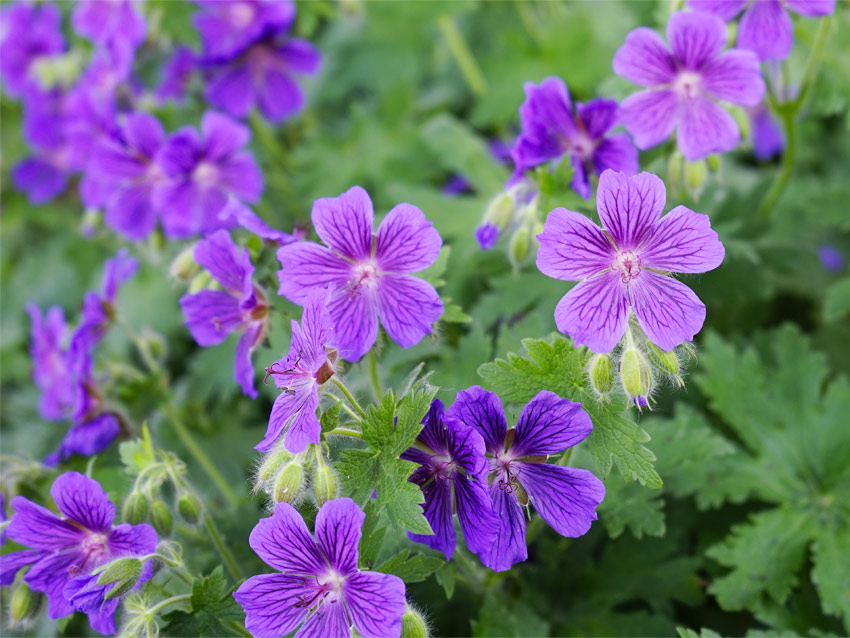 Best plants for a beautiful shade garden