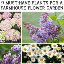 Farmhouse flower garden picks
