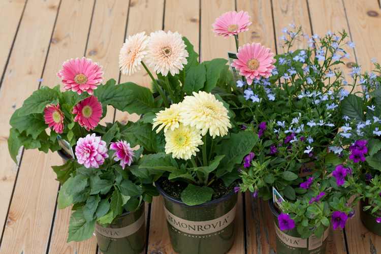 Farmhouse garden planter