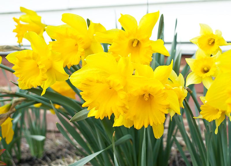 Spring beauty at the farmhouse