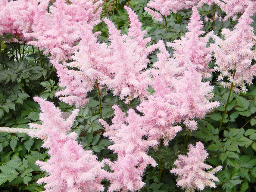 Best plants for a beautiful shade garden