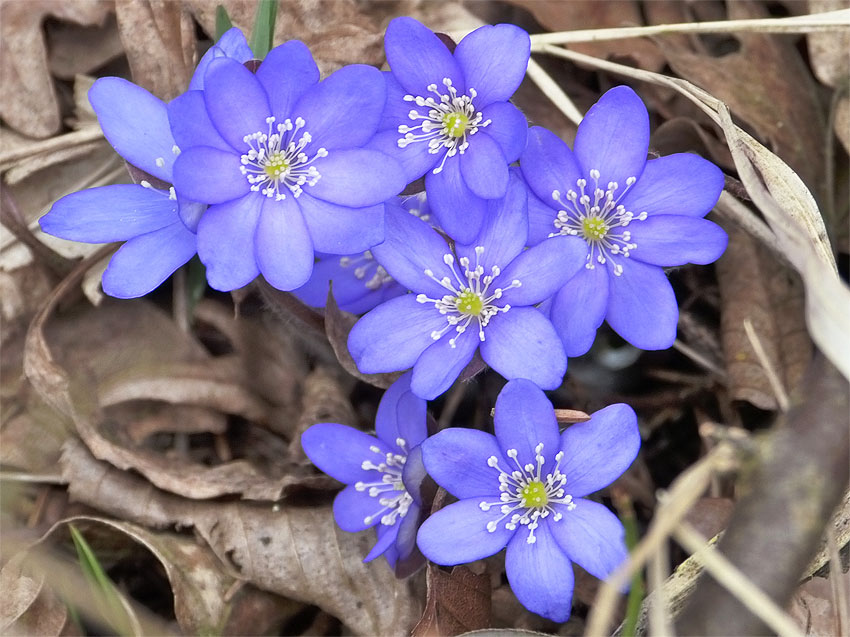 10 Best Flowering Shade Plants Hello Farmhouse