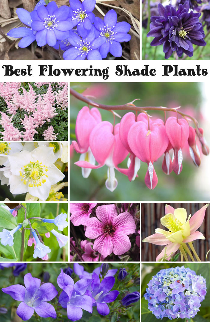 10 Best Flowering Shade Plants
