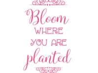 bloom-where-you-are-planted-sm