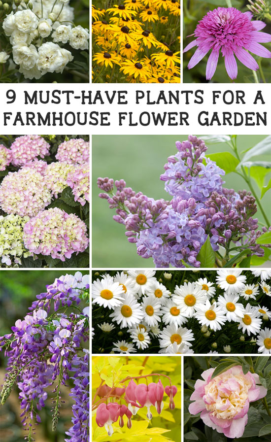 These 9 plants will give any garden farmhouse charm and beauty!
