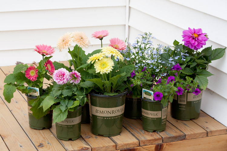 Farmhouse garden planter